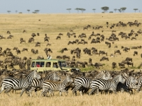 serengeti-national-park_flexible_safaris_